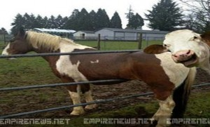 Empire-News-Man-Sues-After-His-Horse-Is-Mocked-By-Neighbors-Cow