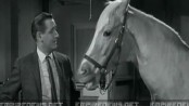 Classic Sitcom Talking Horse 'Mr. Ed' Disappears From Taxidermy Museum2