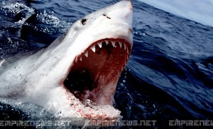 Shark Week- Discovery Channel Announces 2014 Will Be The Last; PETA Says It's About Time