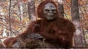 Teenage Boy Dressed as Bigfoot Shot by Texas Hunter, Clings To Life In Hospital