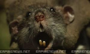 'Super Rats' Terrorize New York City