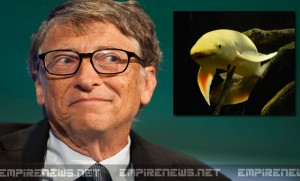 Bill Gates Pays $12 Million Ransom For Return Of Beloved Pet Fish; Suspect Remains At Large