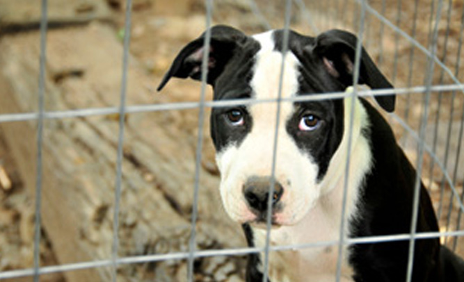 "Animal Shelter in California Initiates ""Scared Straight"" Program for Rebellious Puppies"