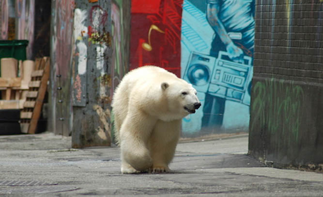NYC Residents Report Polar Bear Sightings Throughout City