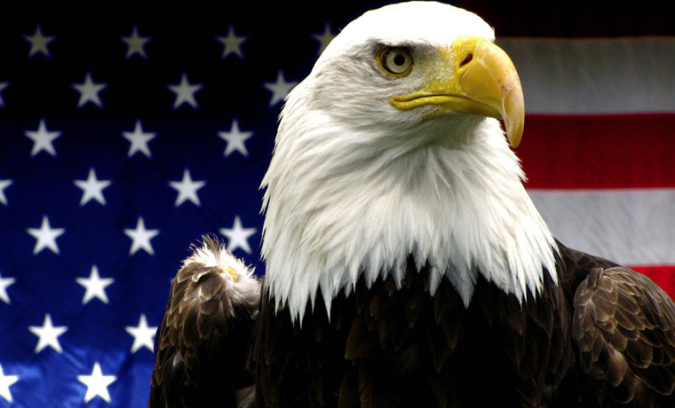 American Bald Eagles Reconsider Extinction After Touring U.S.