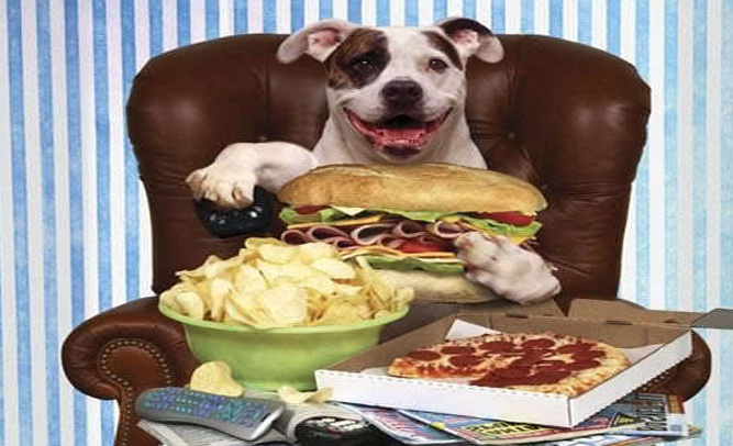 Nation's Dogs Ask Owners for More 'Human Food'