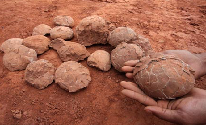 Chinese Road Crew Cook, Eat Dinosaur Eggs Unearthed During Construction