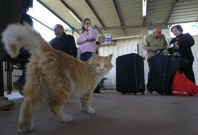 Tsa To Begin Using Drug Sniffing Cats At Airports Empire