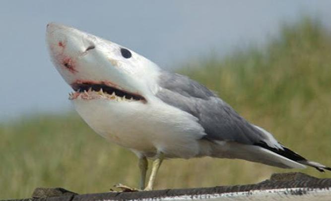 Rare Species Of Birds species | Empir...
