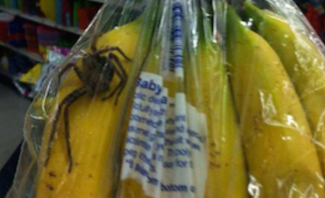 spiderbanana